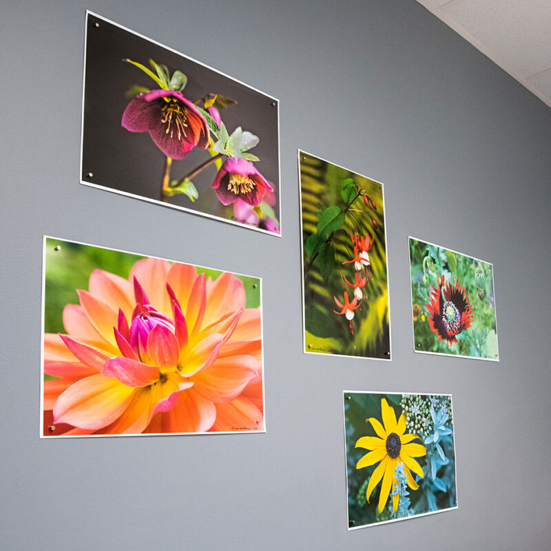 flower-posters